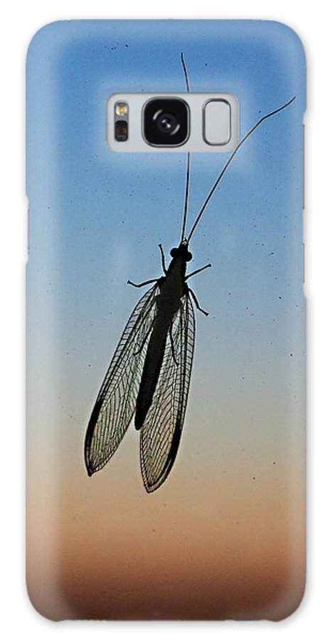 Insect Galaxy S8 Case featuring the photograph Lacewing by Carl Engman