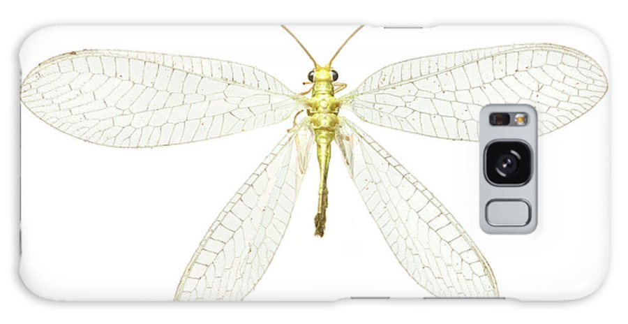 Animal Galaxy Case featuring the photograph Lacewing by Natural History Museum, London