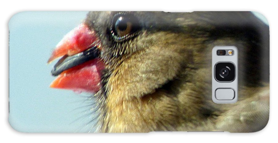 Cardinal Galaxy Case featuring the photograph Lady Cardinal by Rennae Christman
