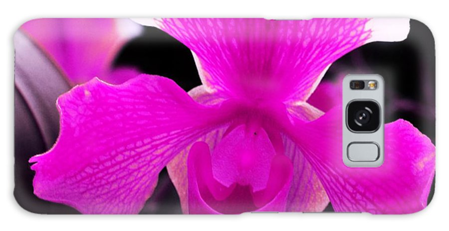 Orchid Galaxy S8 Case featuring the photograph Lady Slippers by Kathleen Struckle