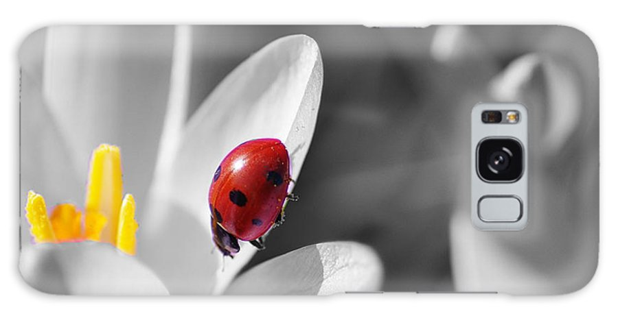 Animal Galaxy S8 Case featuring the photograph Ladybug Black And White In Colorkey by Tanja Riedel