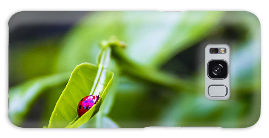 Ladybug Galaxy S8 Case featuring the photograph Ladybug Cup by Marvin Spates