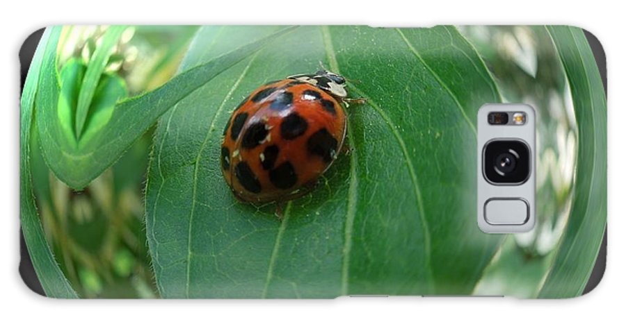 Galaxy S8 Case featuring the photograph Ladybug Eating Aphids by Renee Trenholm