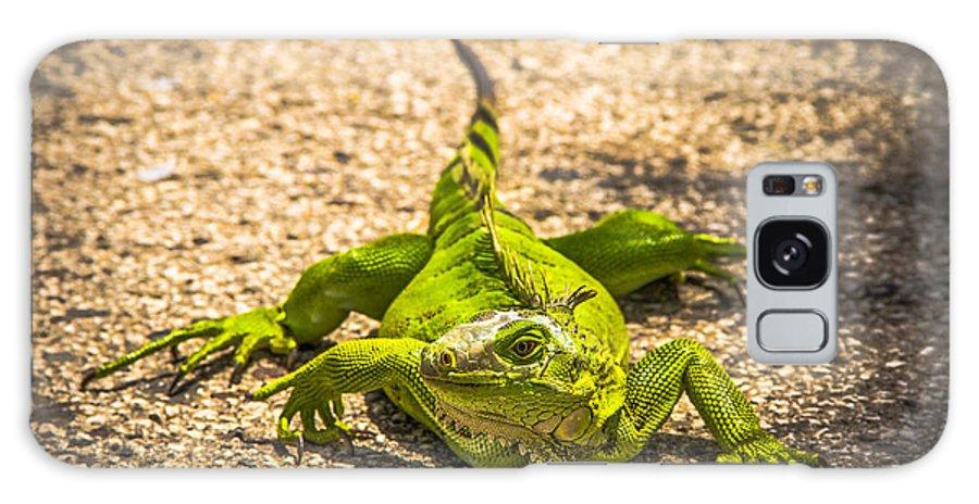 Lizard Galaxy S8 Case featuring the photograph Lagarto by Nel Saints