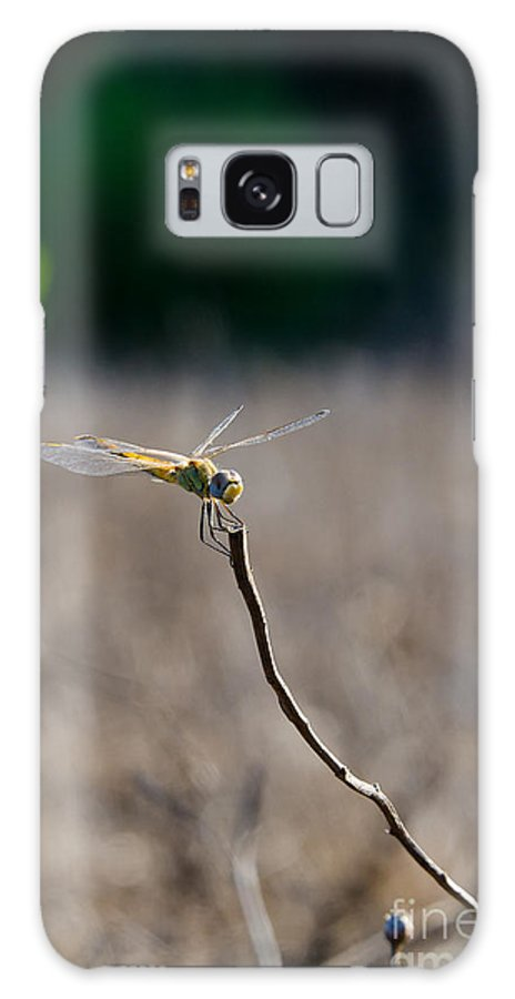 Dragonfly Aviation Galaxy S8 Case featuring the photograph Landing On The Edge by Arik Baltinester