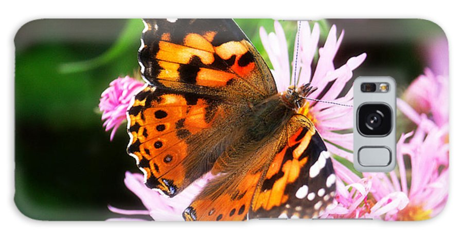 Flower Galaxy Case featuring the photograph Late Summer Painted Lady by Marilyn Hunt