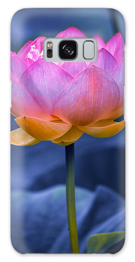 Aquatic Galaxy S8 Case featuring the photograph Lavender Lotus by Brian Stevens