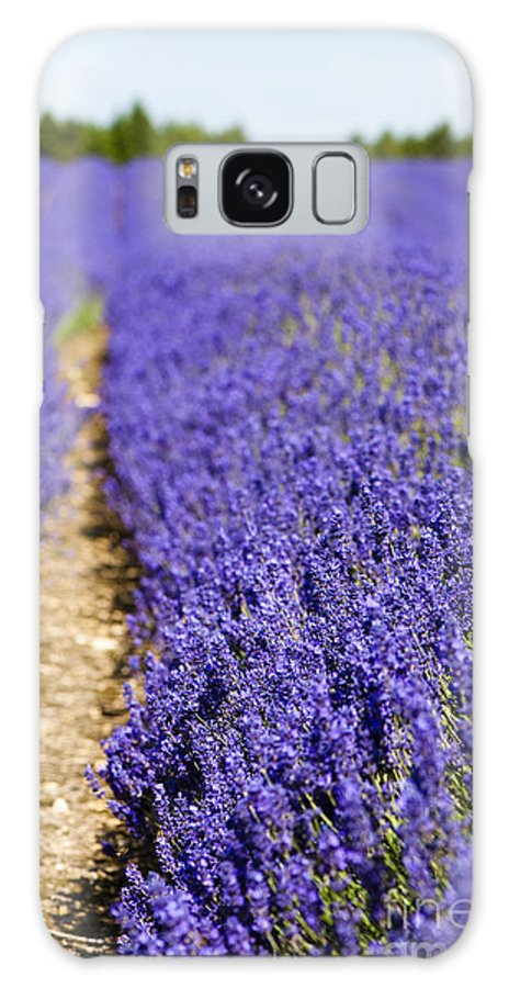 Floral Galaxy S8 Case featuring the photograph Lavender's Blue by Anne Gilbert