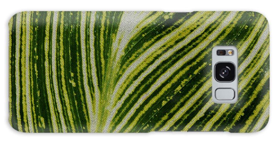 Flora Galaxy S8 Case featuring the photograph Leaf Lines by LeeAnn McLaneGoetz McLaneGoetzStudioLLCcom
