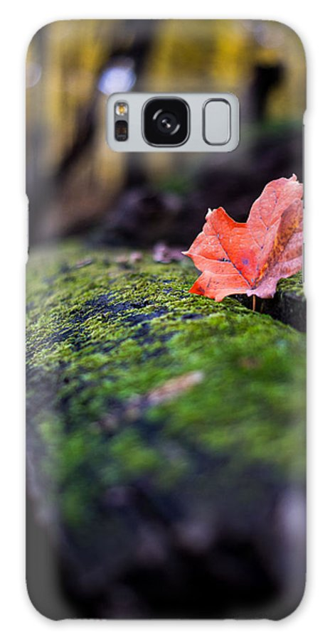 Landscape Galaxy S8 Case featuring the photograph Leaf by Matthew Sawicki