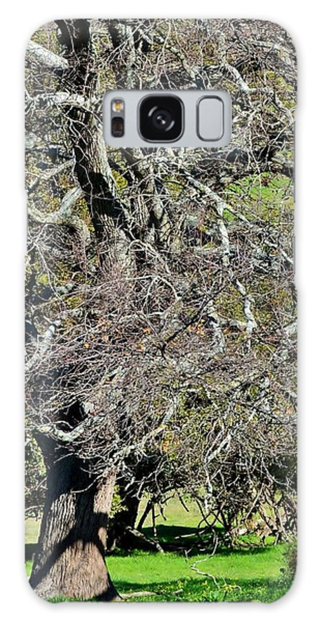 Close Up; Leafless; Tree; Green; Meadow; Winter; South Africa; Durbanville; Farm Land; Grass; Background; Branches; Twigs; Decorative; Natur; Trunk; Stem; Galaxy S8 Case featuring the photograph Leafless Tree by Werner Lehmann
