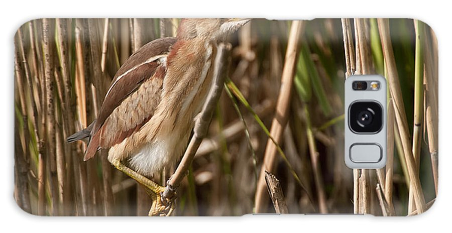 Least Bittern Galaxy S8 Case featuring the photograph Least Bittern Pictures 1 by Heron Images