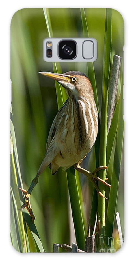 Least Bittern Galaxy S8 Case featuring the photograph Least Bittern Pictures 5 by Heron Images