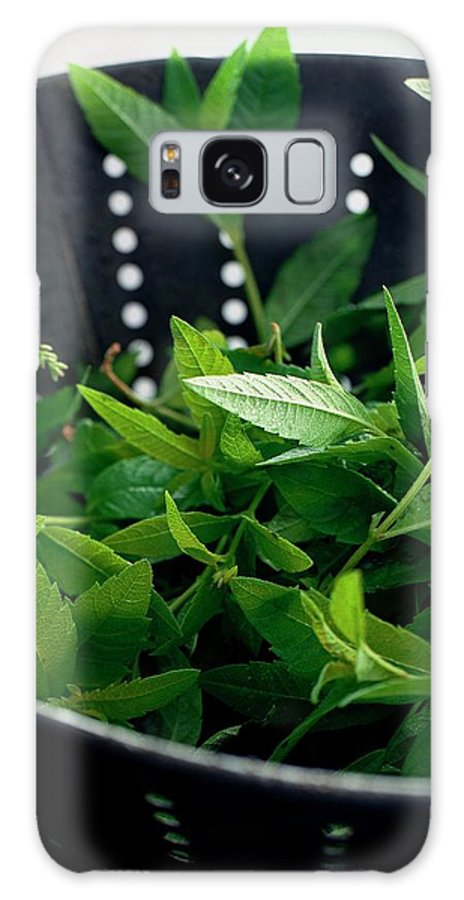 Cooking Galaxy S8 Case featuring the photograph Lemon Verbena Herbs by Romulo Yanes