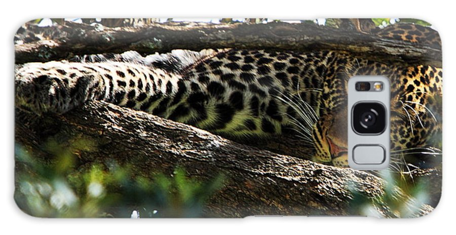 Leopard Galaxy S8 Case featuring the photograph Leopard In A Tree by Aidan Moran
