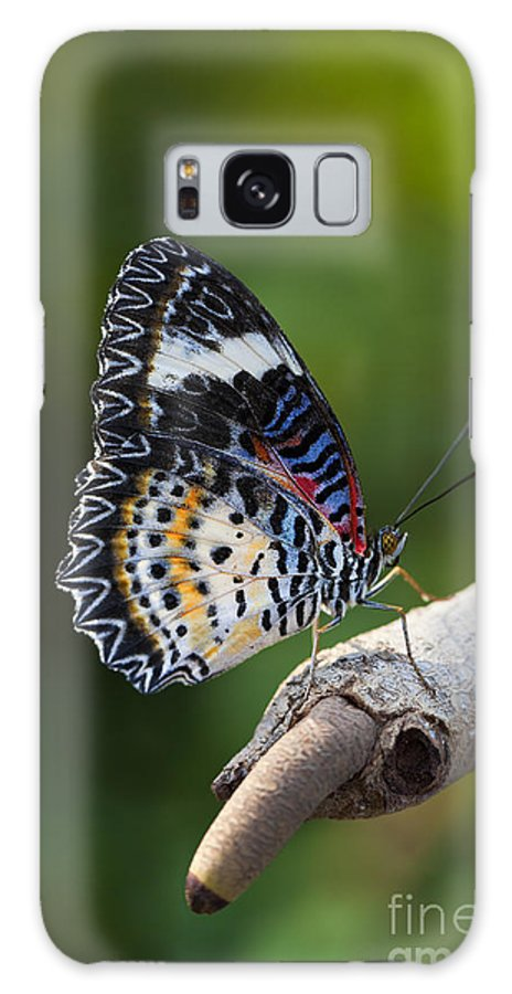 Butterfly Galaxy S8 Case featuring the photograph Leopard Lacewing Butterfly by Brandon Alms