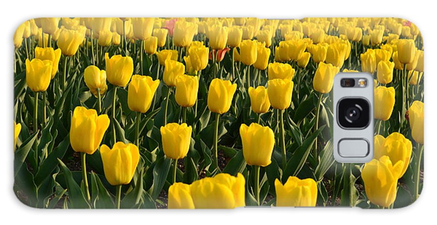 Yellow Tulips Galaxy S8 Case featuring the photograph Let The Sunshine by Janet Davaros