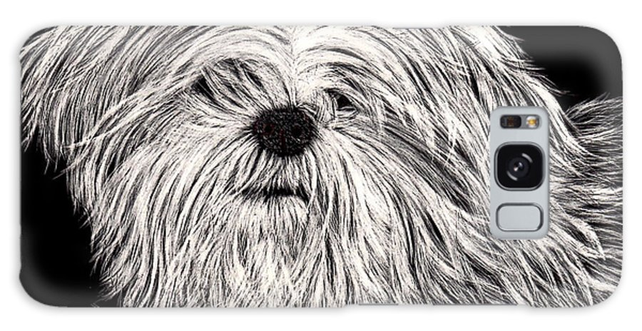 Lhasa Galaxy S8 Case featuring the drawing Lhasa Apso by Terri Mills