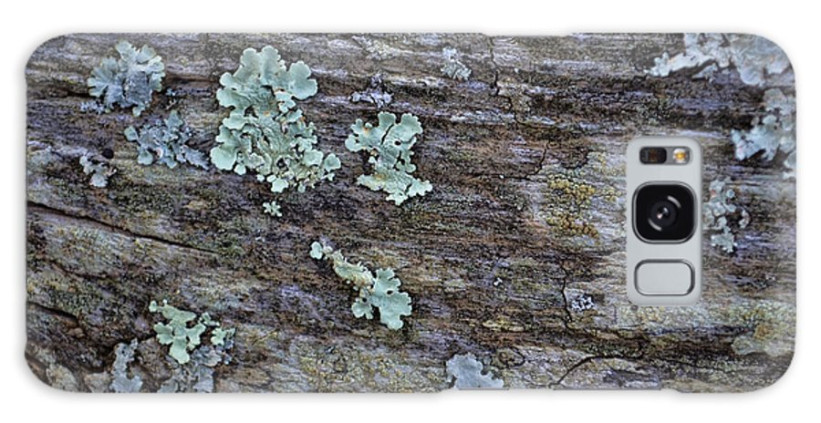 Closeup Galaxy S8 Case featuring the photograph Lichen Macro II by Debbie Portwood