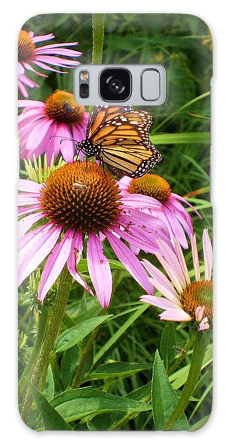 Purple Coneflower Framed Prints Galaxy S8 Case featuring the photograph Life's Rare Jewels by Ann Willmore
