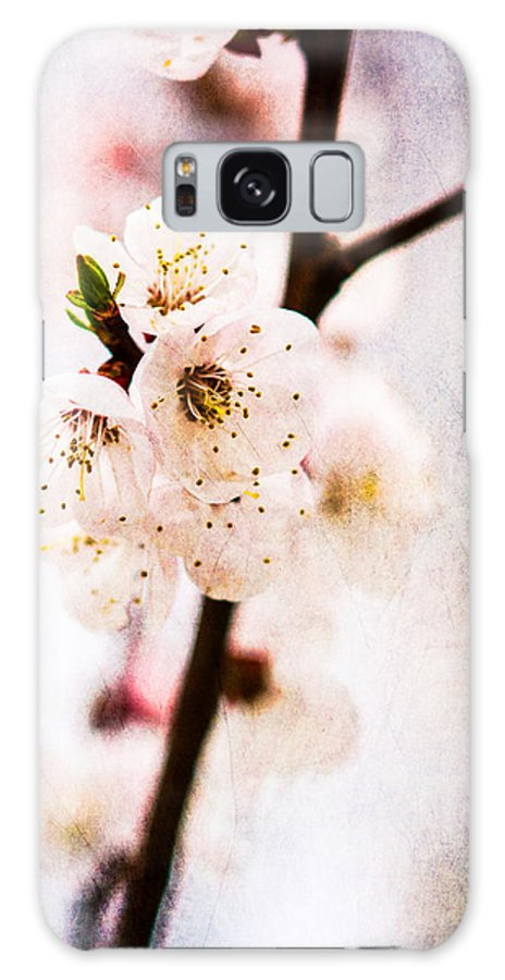 Flower Galaxy S8 Case featuring the photograph Light Of Spring 3 by Alexander Senin