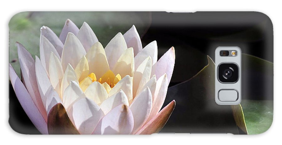Summer Galaxy S8 Case featuring the photograph Light Pink Water Lily by Terri Winkler