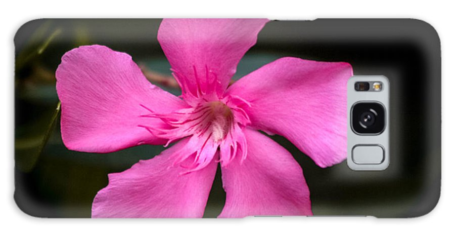 Flowers Galaxy S8 Case featuring the photograph Light Purple by Pam Wallis