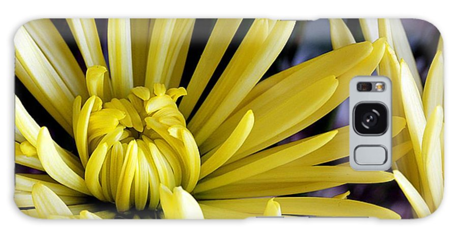 Flower Galaxy S8 Case featuring the photograph Like Bombs Bursting In Air by Joe Kozlowski