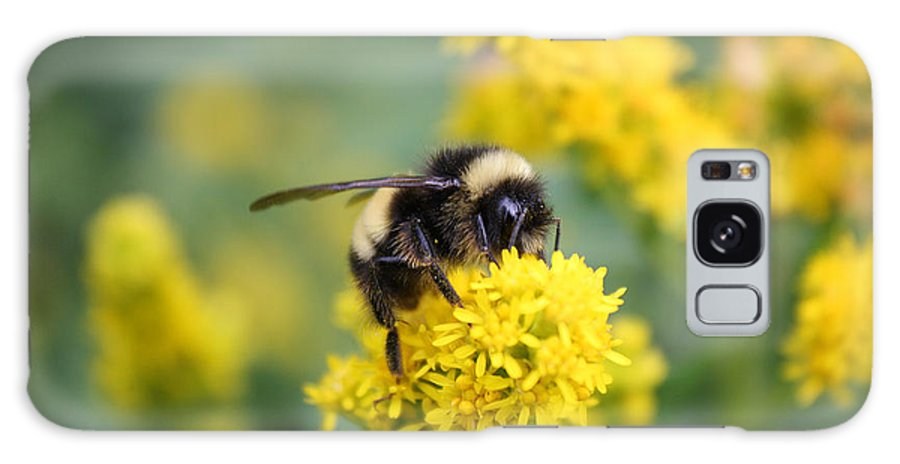Honey Bee Galaxy S8 Case featuring the photograph Lil Bee by Pkm digital Photography