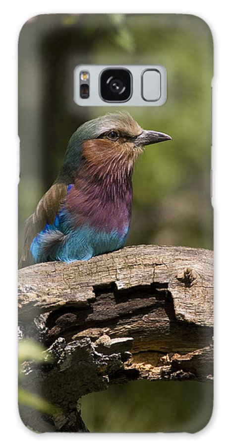 Lilac Breasted Roller Galaxy S8 Case featuring the photograph Lilac Breasted Roller by Chad Davis