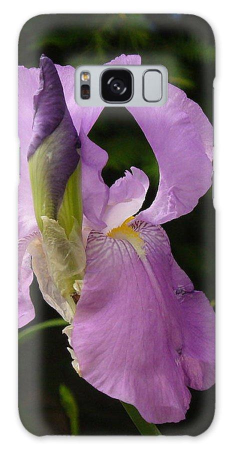 Lilac Iris Galaxy S8 Case featuring the photograph Lilac Siberian Iris by Lingfai Leung