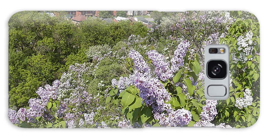 Lilacs Galaxy S8 Case featuring the photograph Lilacs On The Hill by Corinne Elizabeth Cowherd