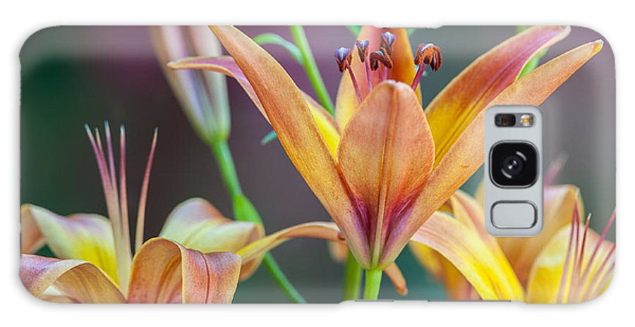 Lily Galaxy S8 Case featuring the photograph Lily From The Garden by Randy Walton