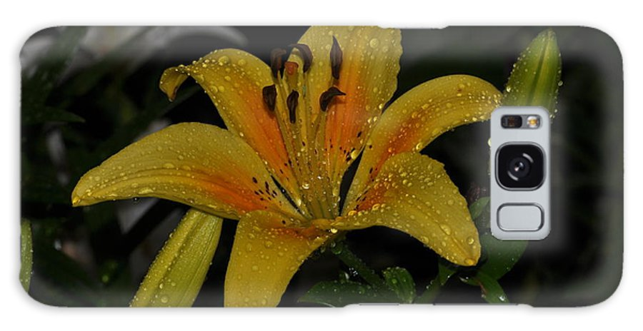 Lily Galaxy S8 Case featuring the photograph Lily In The Rain by Sherri Quick