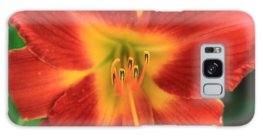 Reid Callaway Day Lily 5 Galaxy S8 Case featuring the photograph Daylily 5 by Reid Callaway