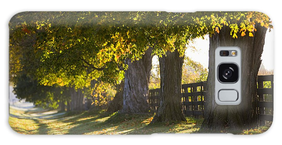 Light Galaxy S8 Case featuring the photograph Line Of Maple Trees Along Rural Road In by Jim Craigmyle