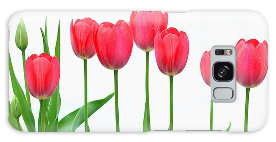 Flowers Galaxy S8 Case featuring the photograph Line Of Tulips by Steve Augustin