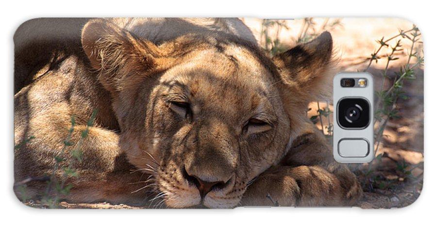 Kalahari Desert Galaxy S8 Case featuring the photograph Lion Close Up by Davide Guidolin
