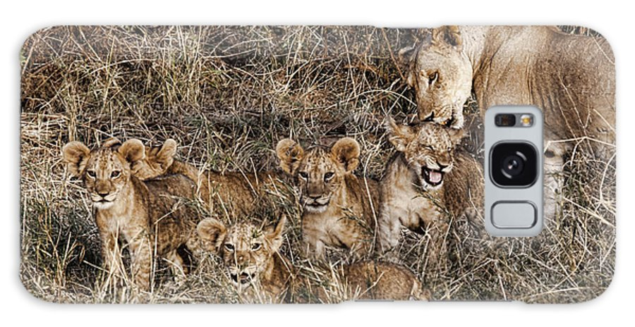 Lions Babies Cubs Mother Mom Licking Bathing Group Kenya Africa Galaxy S8 Case featuring the photograph Lion Love by Wendy White