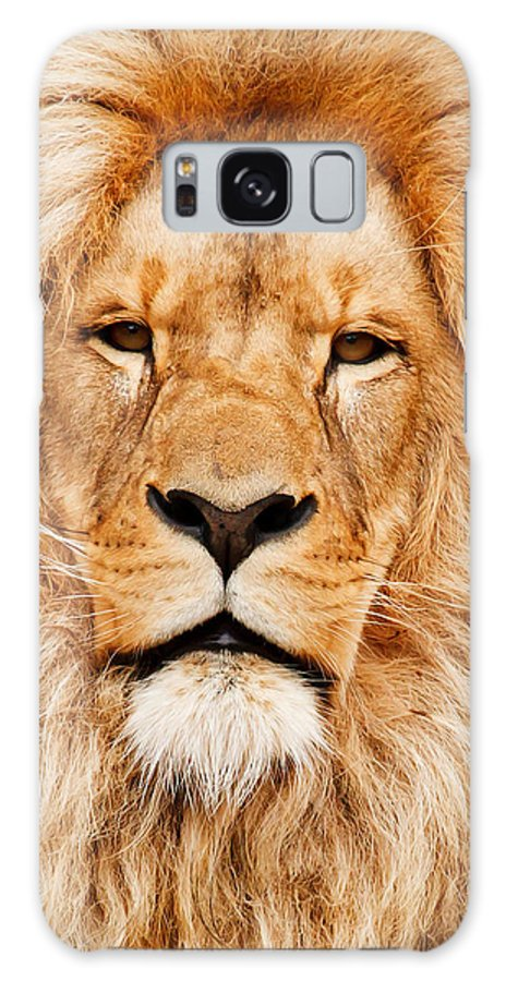Africa Galaxy S8 Case featuring the photograph Lion Portrait by Tilen Hrovatic