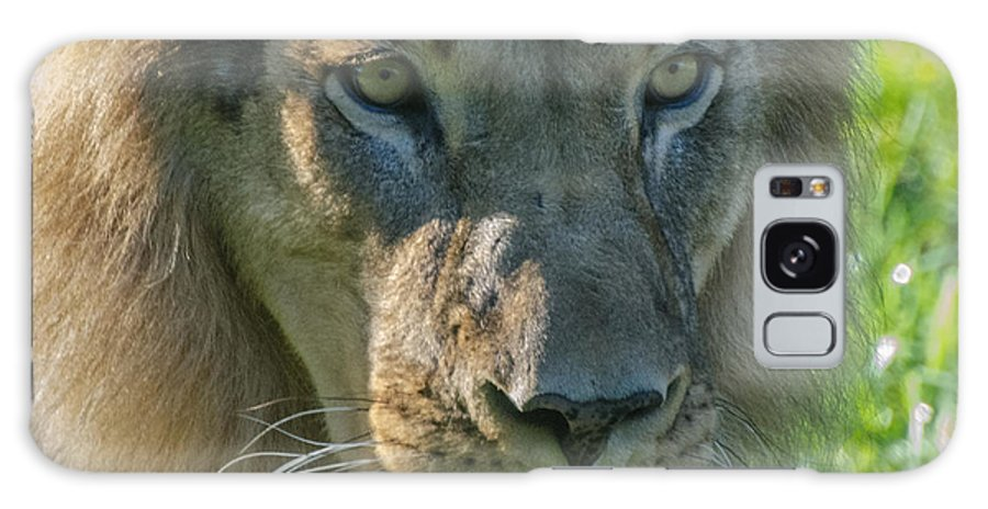 Lion Galaxy S8 Case featuring the photograph Lion by Yuri Levchenko