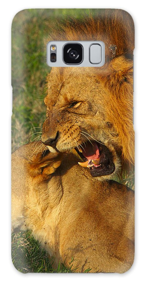 Lions Galaxy S8 Case featuring the photograph Roar by Naoki Takyo