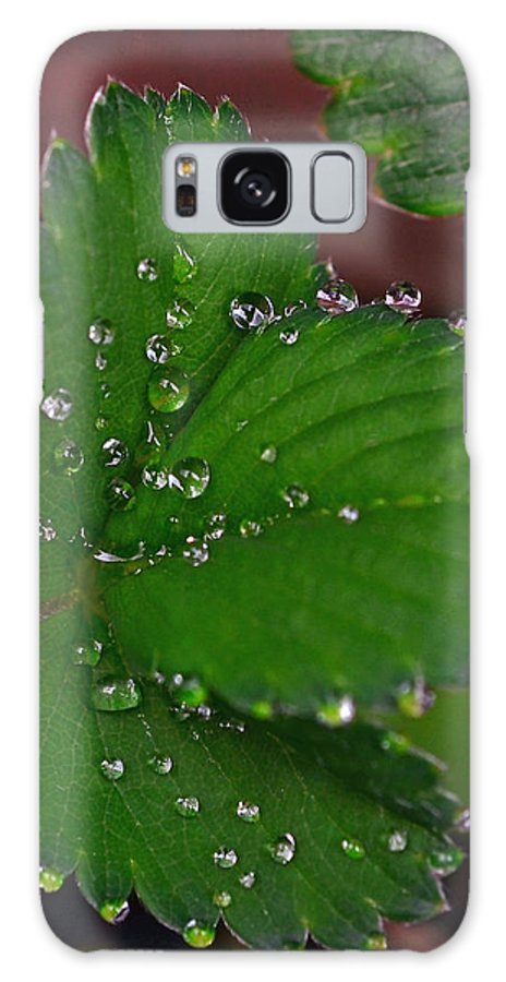 Liquid Pearls On Strawberry Leaves Galaxy S8 Case featuring the photograph Liquid Pearls On Strawberry Leaves by Lisa Phillips