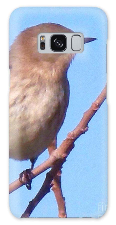 Bird Galaxy S8 Case featuring the photograph Little Bird by Eric Schiabor