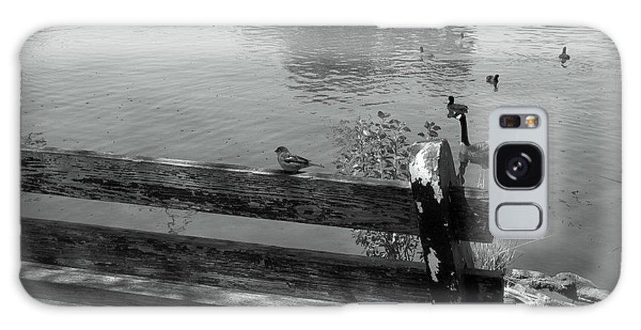 Little Bird On A Bench Galaxy S8 Case featuring the photograph Little Bird On A Bench by Beth Vincent