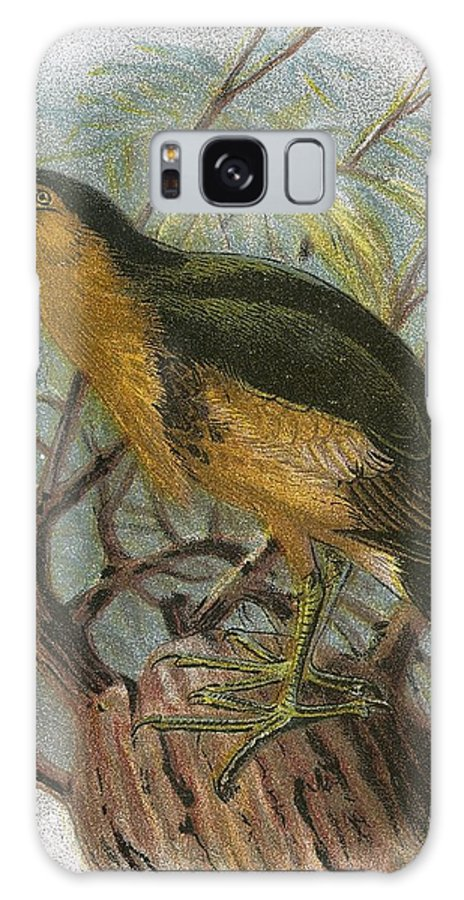 British Birds Galaxy S8 Case featuring the photograph Little Bittern by English School