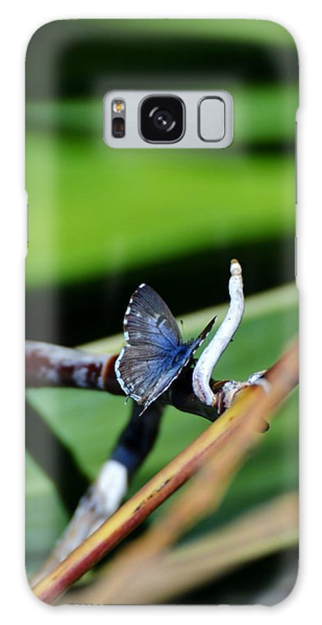 Close Up; Butterfly; Insect; Garden; Green; Brown; Background; Decorative; Nature; Wings; Fragile; Little; Leaf; Plant; Grey; Blue; Galaxy S8 Case featuring the photograph Little Blue Butterfly by Werner Lehmann