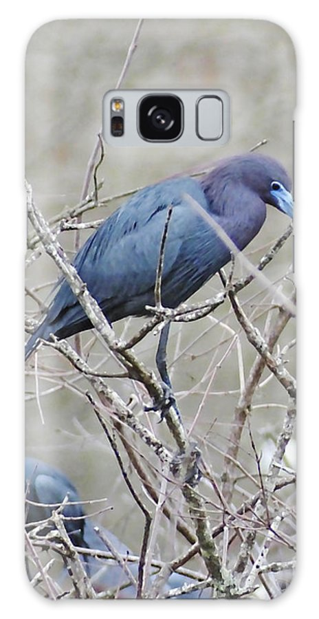 Blue Heron Galaxy S8 Case featuring the photograph Little Blue Lake Martin Louisiana by Lizi Beard-Ward