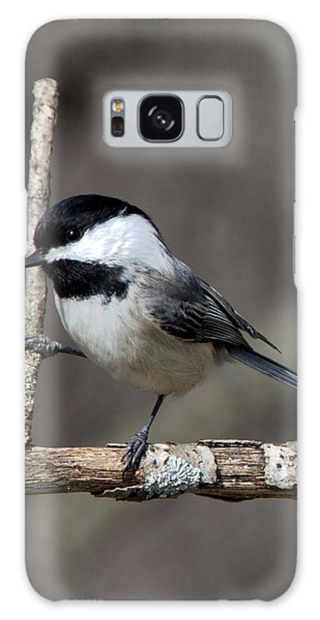 Chickadee Galaxy S8 Case featuring the photograph Little Chickadee 2 by John Crothers