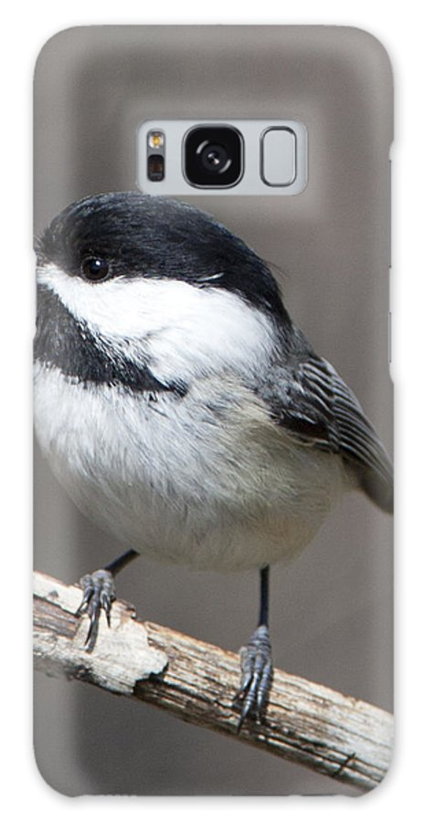 Chickadee Galaxy S8 Case featuring the photograph Little Chickadee 3 by John Crothers